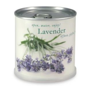 macflower-taimekonserv-lavendel.png