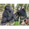 3D-pusle-NG-super-63tk-simpans-gorilla_1.jpg